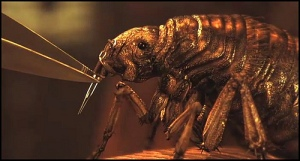 The flea is affixed with a poison barb that turns the person homicidal when released.
