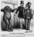 darwin cartoon, 1871