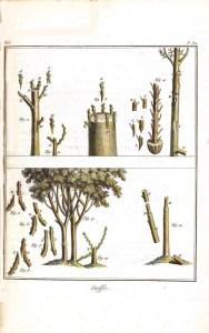 Botanical - Tree - Grafting tree, diagram