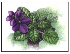 violetcover